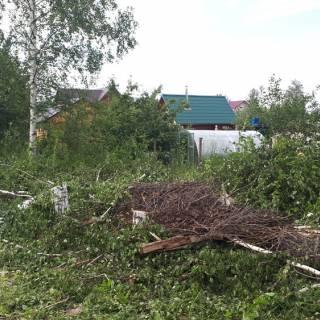 Спил берез, Щербинки, 2018г