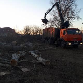 Спил дерева, Горбатовка, 2018г