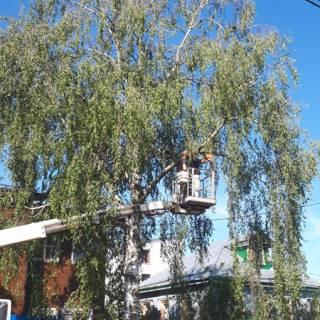 Спил дерева на автовышке, Стригино, 2018г