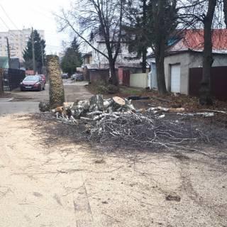 Спил дерева на автовышке, Лапшиха, 2019г