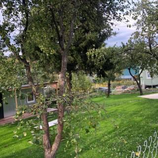 Озеленение, СНТ Мичурино, 2020г