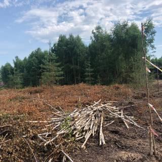 Расчистка участка 1га, Бушнево, 2020г