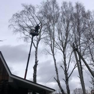 Спил дерева на автовышке, Першино, 2020г