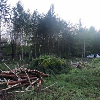 Спил деревьев, Шелухово, 2020г